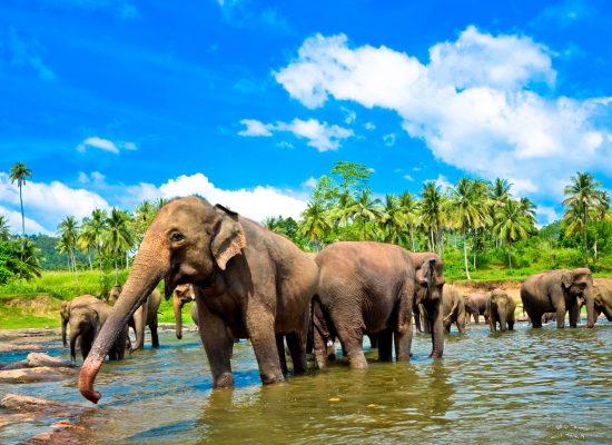 Elephant-Orphanage